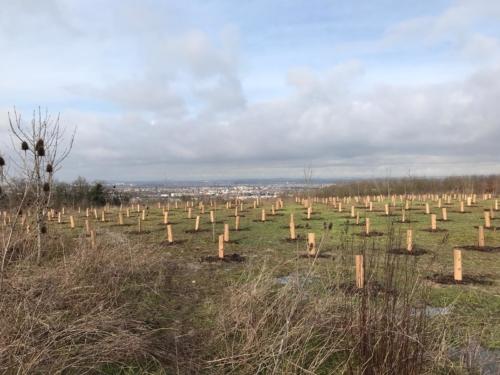 PLANTATION FORESTIERE D'UNE ANCIENNE CARRIERE
