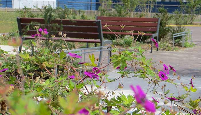 entretien-jardin-et-parc-quesnot-paysage